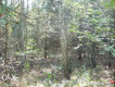 Działka leśna Trześń