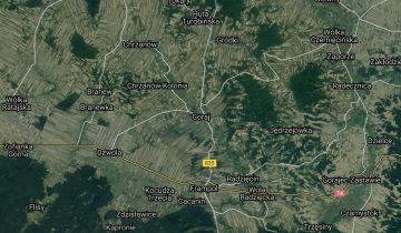 Działka leśna Goraj. Zdjęcie 1