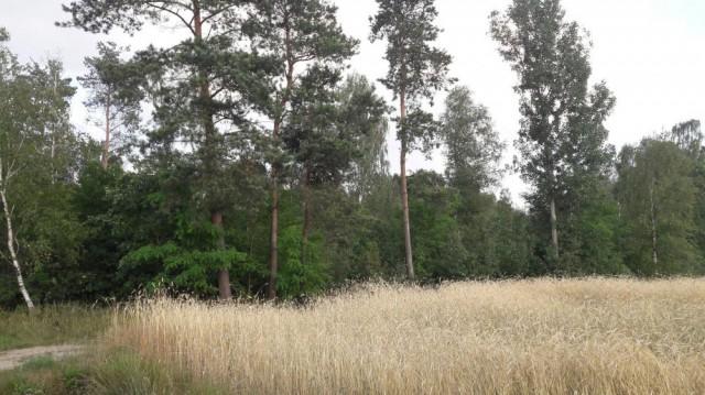 Działka leśna Chorzewa