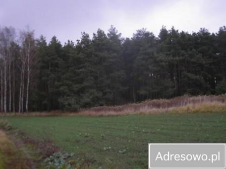Działka leśna Rzęczkowo