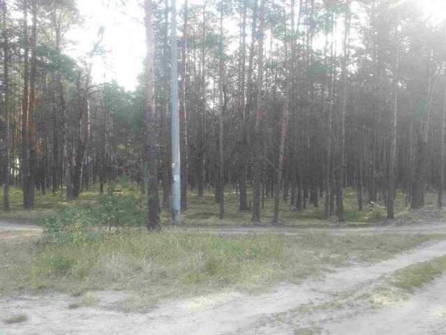 Działka leśna Popowo-Letnisko