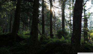 podłączyć leśny las