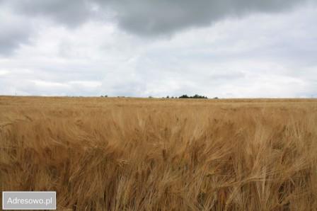 Działka rolna Mojtyny