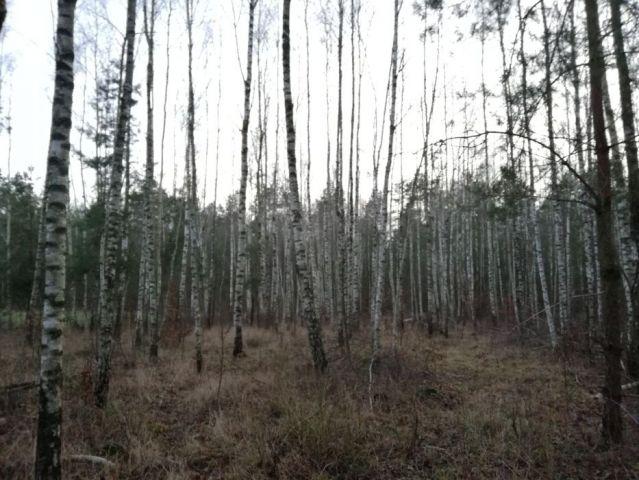 Działka leśna Nowosiółki