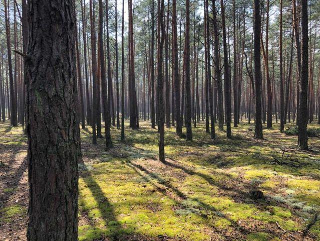 Działka leśna Tereszpol-Zaorenda