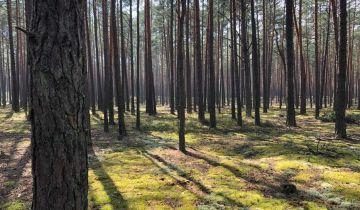 Działka leśna Tereszpol-Zaorenda. Zdjęcie 1