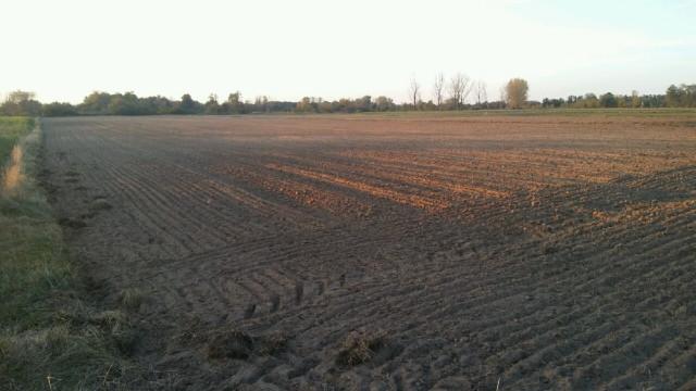 Działka rolna Borzewisko