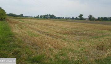Działka siedliskowa Prandocin-Wysiołek. Zdjęcie 1
