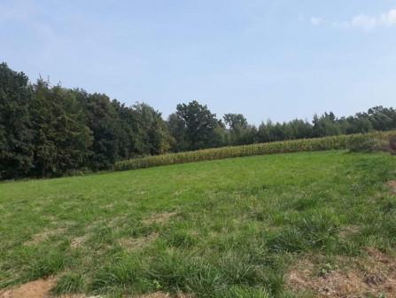 Działka rolno-budowlana Masłomiąca