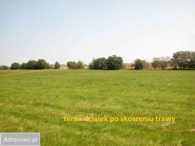 Działka rolna Sarbia
