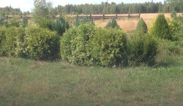 gospodarstwo, 5 pokoi Michalinek, Michalinek 15A. Zdjęcie 4