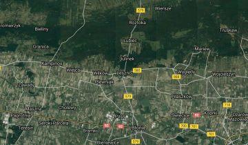 Swieto Singli - directoryzoon.com - Leszno Nasze Miasto