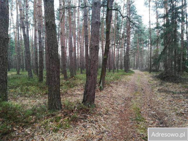 Działka leśna Lipniak-Majorat