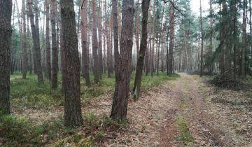 Działka leśna Lipniak-Majorat. Zdjęcie 1