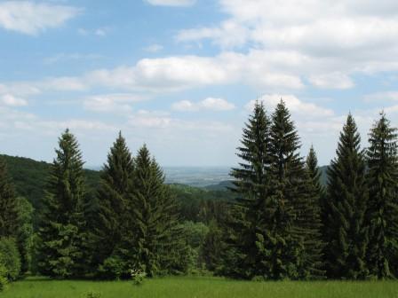 Działka rolna Pieszyce