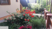 dom wolnostojący, 5 pokoi Boszkowo