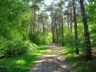 Działka leśna Barcząca