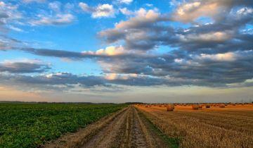 Działka rolna Orpiszew