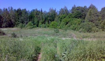 Działka leśna Kucze