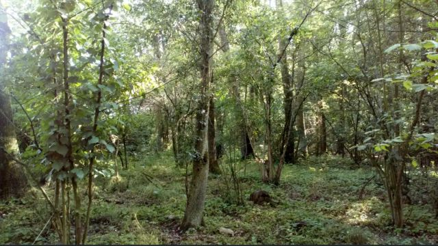 Działka leśna Szyba