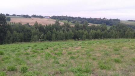 Działka rolno-budowlana Michałowice, ul. Leśna