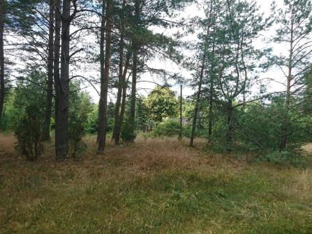 Działka leśna Kopanki