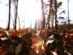 Działka leśna Kruszew