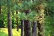Działka leśna Lipiny Górne-Borowina
