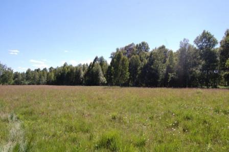 Działka rolna Pilchy