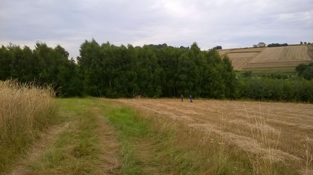 Działka leśna Wielopole Skrzyńskie Sośnice