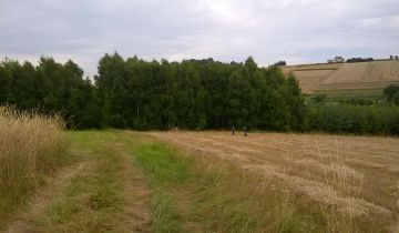 Działka leśna Wielopole Skrzyńskie Sośnice. Zdjęcie 1