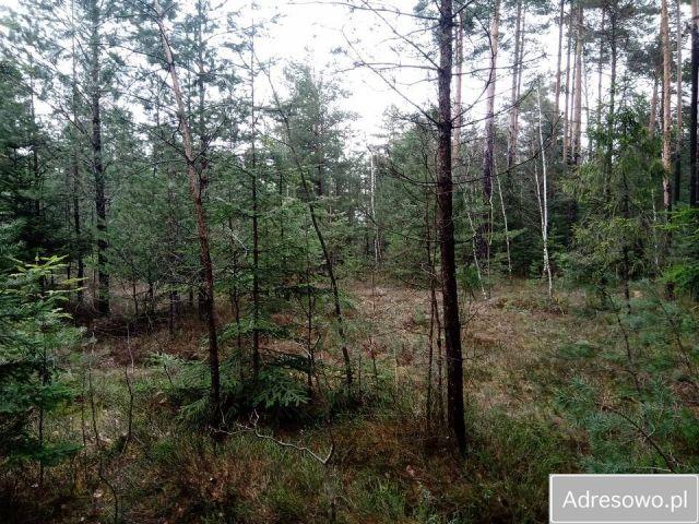 Działka leśna Stary Lipowiec