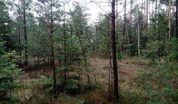 Działka leśna Stary Lipowiec. Zdjęcie 1