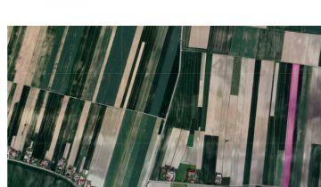 Działka rolna Prandocin-Iły. Zdjęcie 1