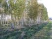 Działka leśna Barcikowo
