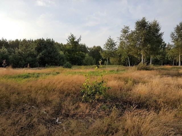Działka rolno-budowlana Jasienica