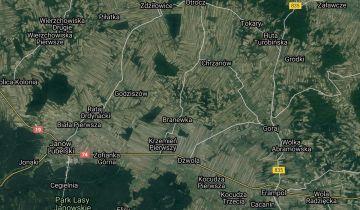 Działka leśna Branew. Zdjęcie 1