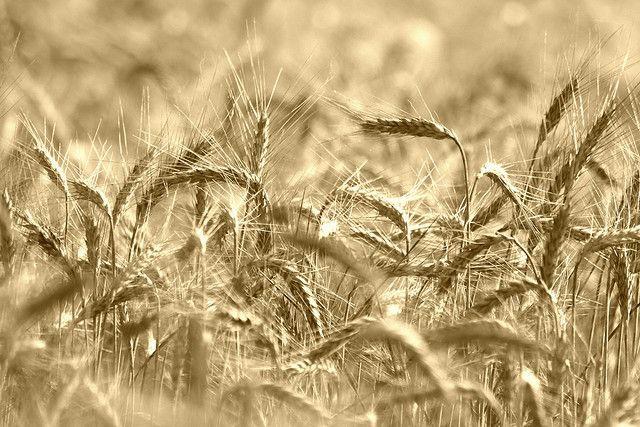 Działka rolna Chorzewa