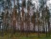 Działka leśna Skalimowo