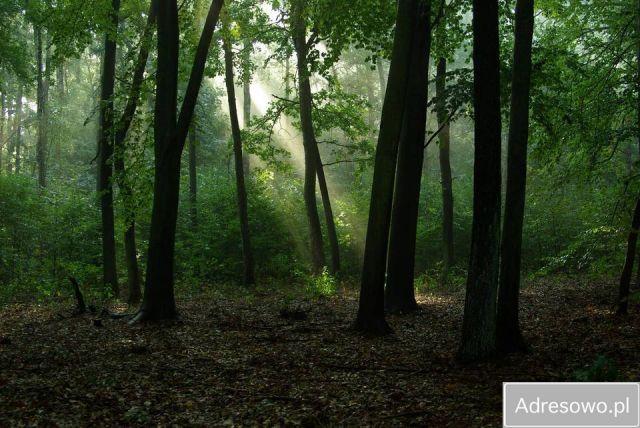 Działka leśna Skaszewo Włościańskie