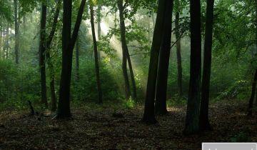 Działka leśna Skaszewo Włościańskie. Zdjęcie 1