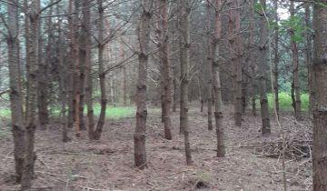 Działka leśna Mniszek. Zdjęcie 1