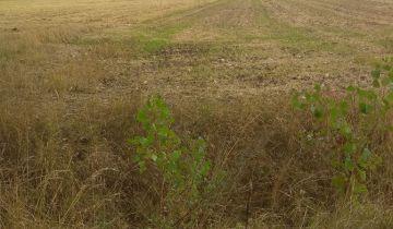 Działka rolna Kadłubek. Zdjęcie 1