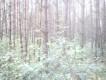 Działka leśna Dmochy-Rogale
