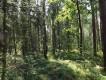 Działka leśna Stanowiska